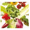BioFresh groente